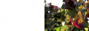 apollonio-catalogo2014-2